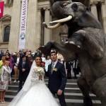فیل بجای ماشین عروس