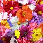نگهداری از گل ها و گیاهان خانگی
